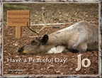 Reindeer_peaceful_day_jo