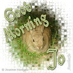 rabbit_good_morning