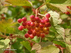 summer_berries