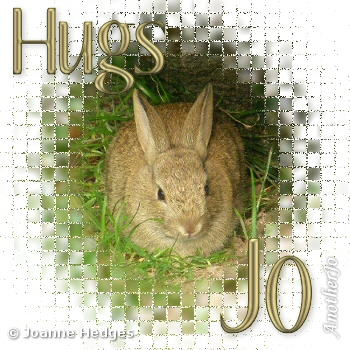 rabbit_hugs